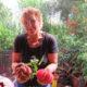 Bio-Tomaten Pflanzen viele ausgefallene Rote Sorte