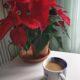 Blumenampel Hängeampel Pflanzenampel Schmiedeeisen Keramik