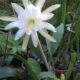 Rarität – unbestimmte Pflanze aus Südamerika -groß