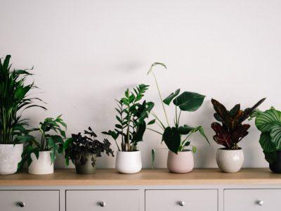 Pflanzen erfolgreich verschicken