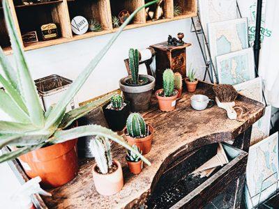 Aus eins mach zwei: Unser Guide zum Pflanzen vermehren!