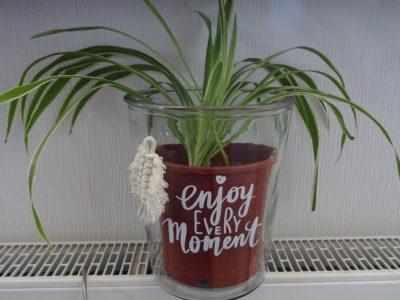 Pflanze *Grünlilie* im XL Schmuckglas