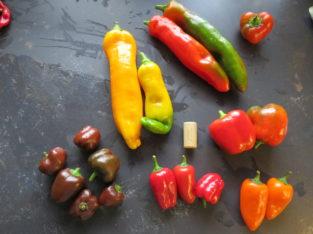 Paprika Bio-Pflanzen 8 verschiedene Sorten