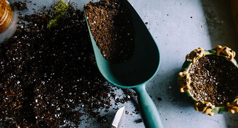 Eigene Jungpflanzen ziehen – Dachgemüse sagt dir wie!