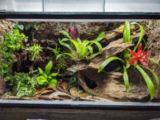 Terrarium bepflanzt 60x30x40