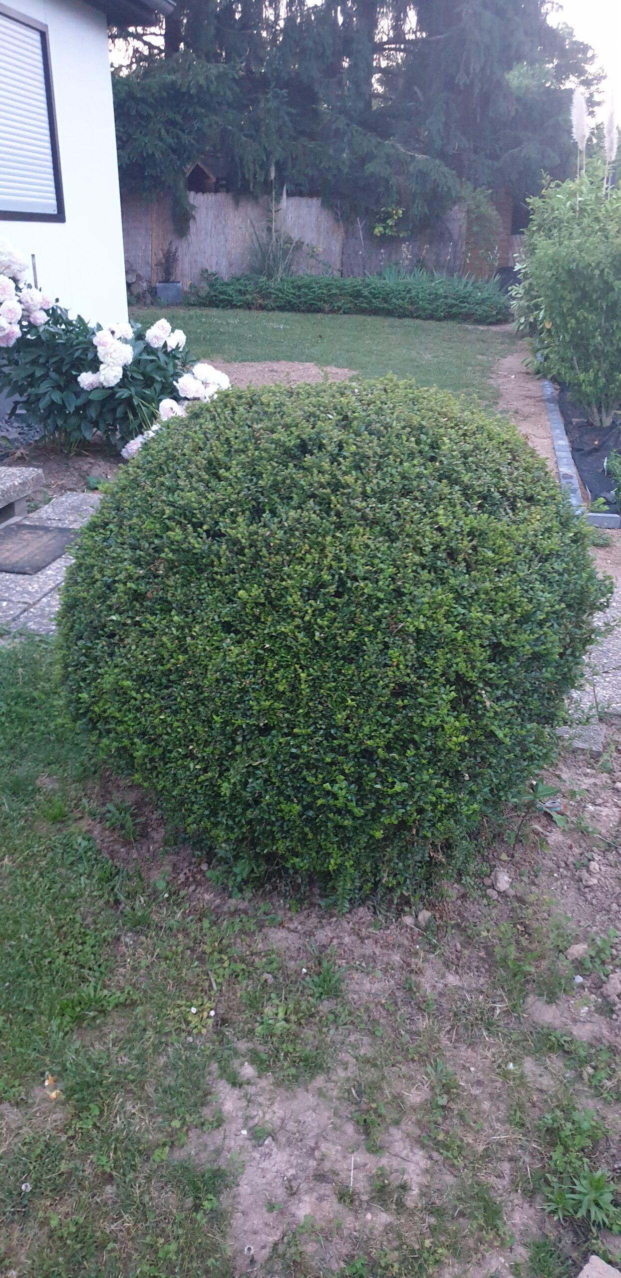 Buchsbaumkugel 120cm