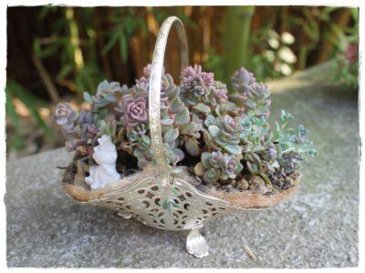 Metallkörbchen versilbert mit Henkel! Bepflanzt mit Sedum