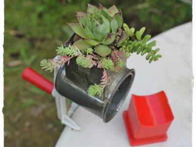 Alte Gewürz- oder Nussmühle mit Hauswurz+Sedum bepflanzt!