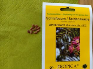 Samen von Schlafbaum, Seidenakazie