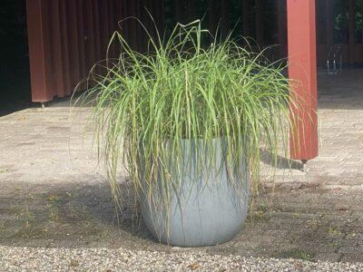 Topf Fieberglas mit Gras