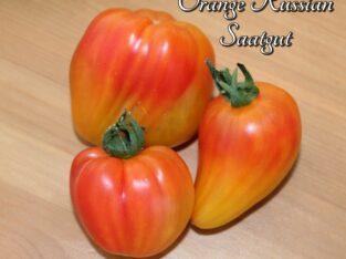 """Bio-Tomaten-Saatgut """"Orange Russian"""" – aus eigenem Naturgarten"""