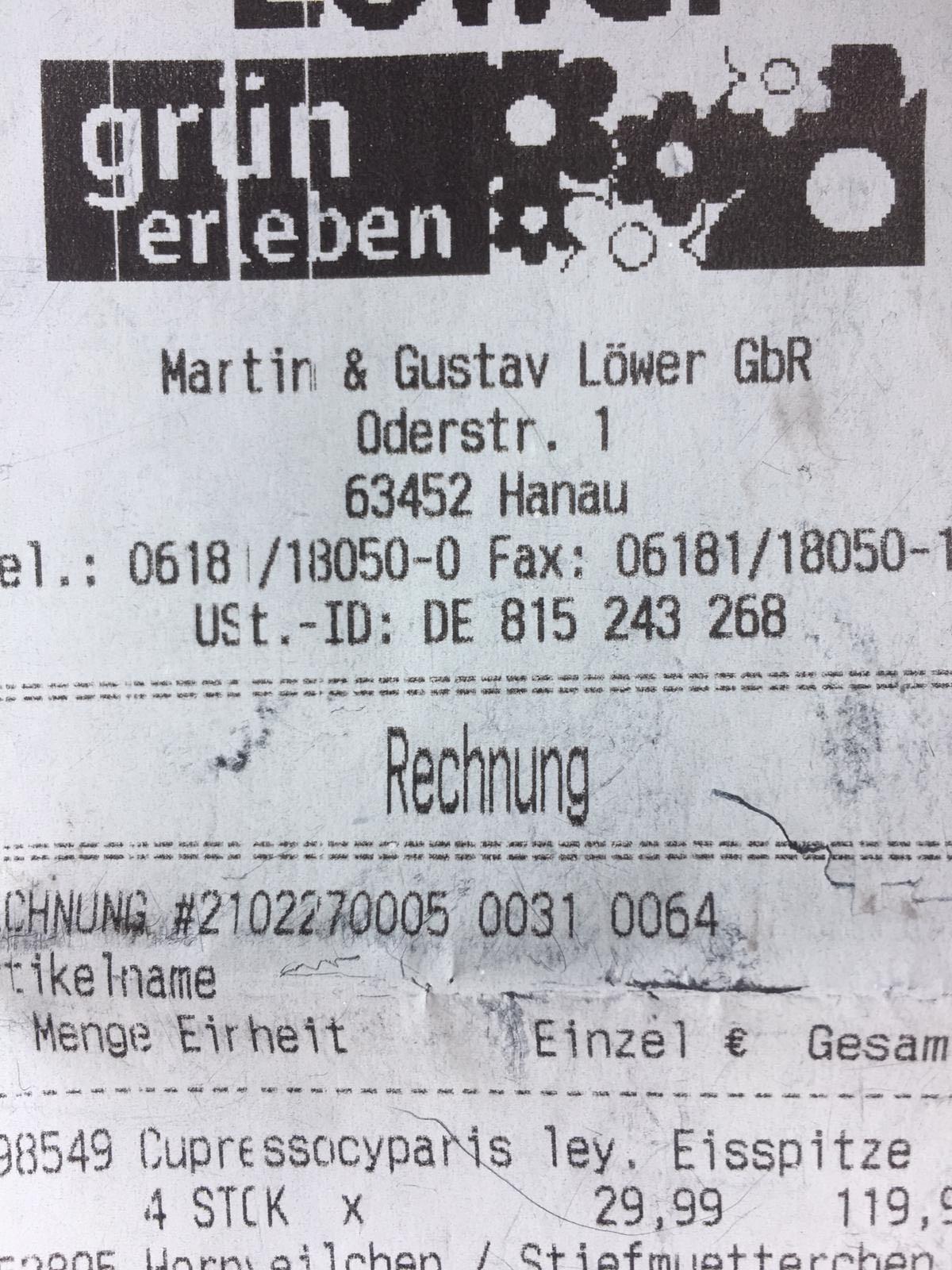 """2 Zypressen """"Eisspitze"""""""