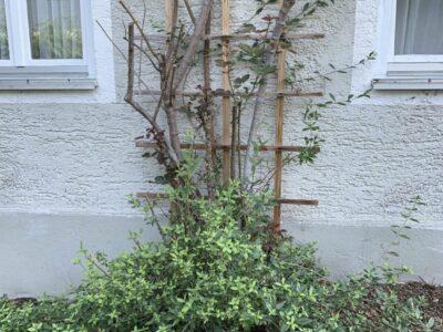 Gartenpflanzen Buchs Rosen Bäume Büsche Rhododendron