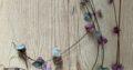 Leuchterblume Variegata 4 strings of hearts
