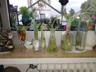 Ableger mit Glas