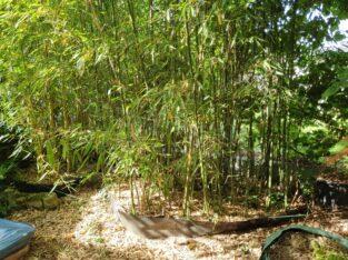 Bambus (2m² grün, 1 m² gelb)