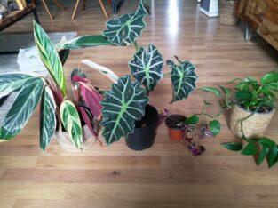 4 Zimmerpflanzen