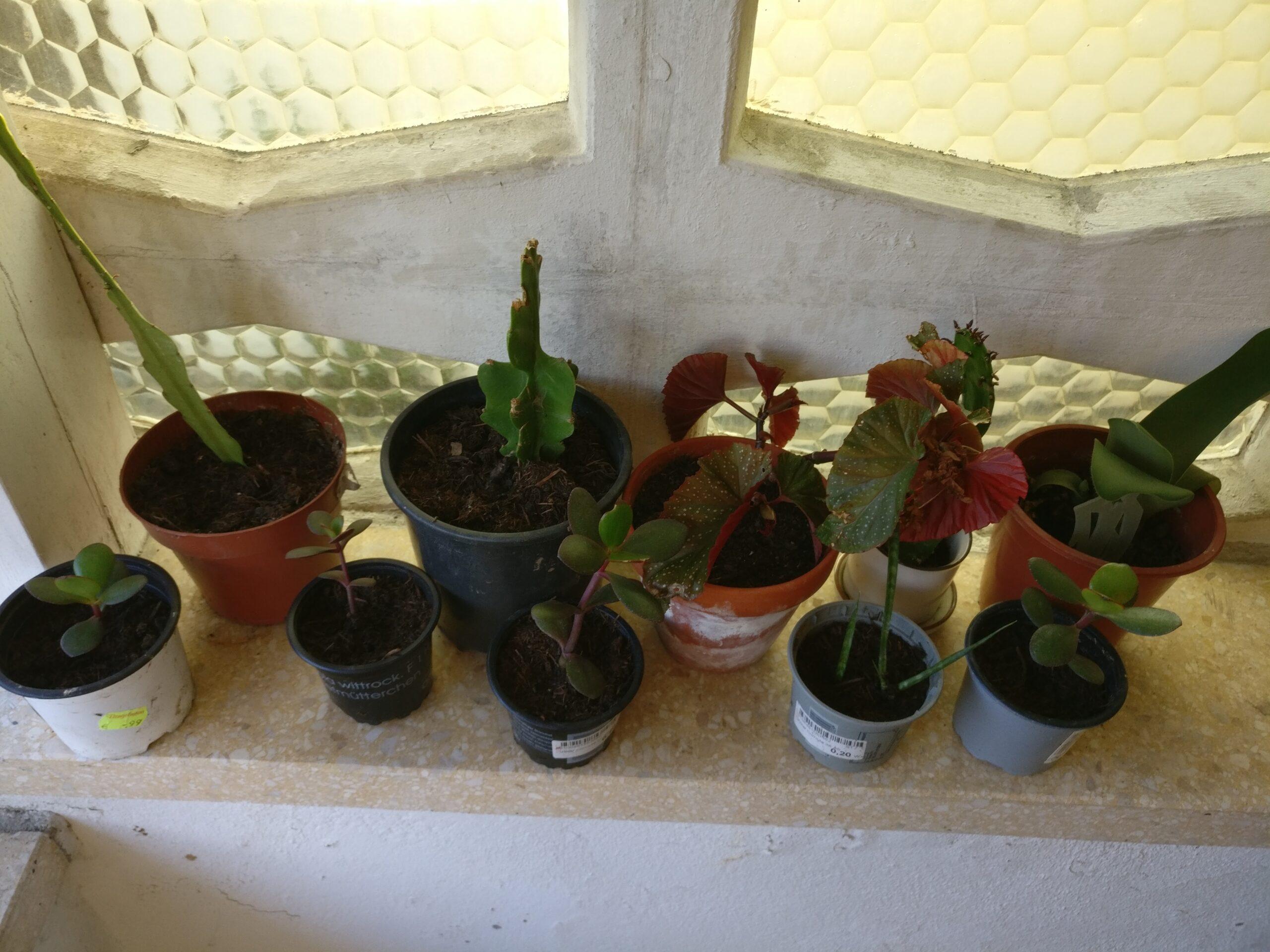 Pflanzenableger