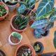 Großes Pflanzenset für Liebhaber