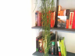 Hängepflanze, Zimmerpflanze, Kaktus?