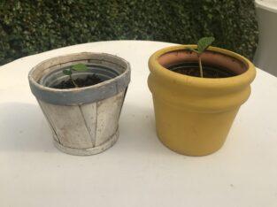 Schöne Pflanze im Übertopf – Neue Ableger