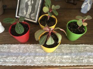 Quartett Pflanzen mit farbenfrohem Topf – je 1 €