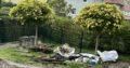 Trompeten Bäume zum selber ausgraben